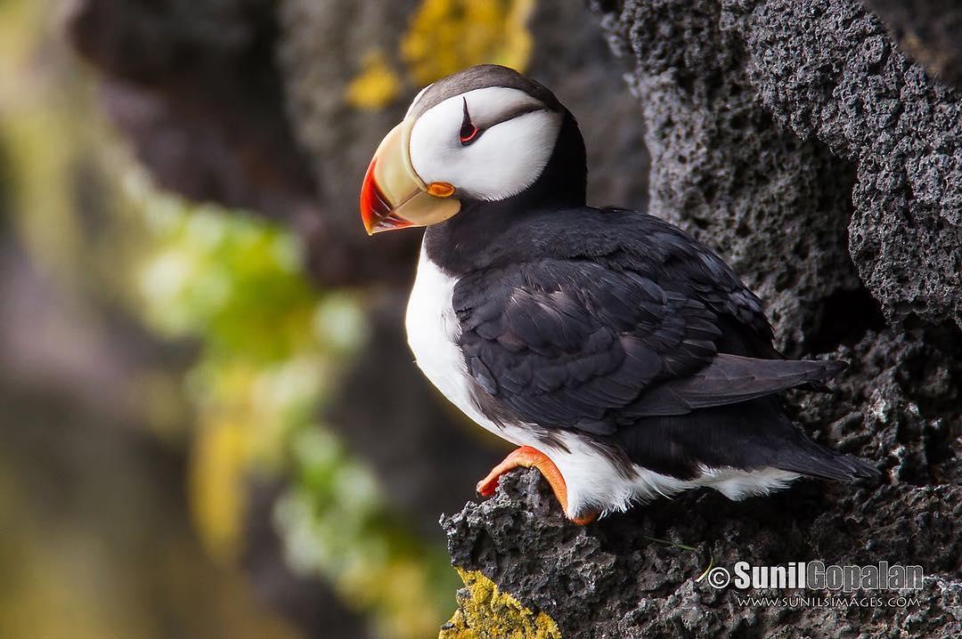 Красота птиц на снимках Сунила Гопалана