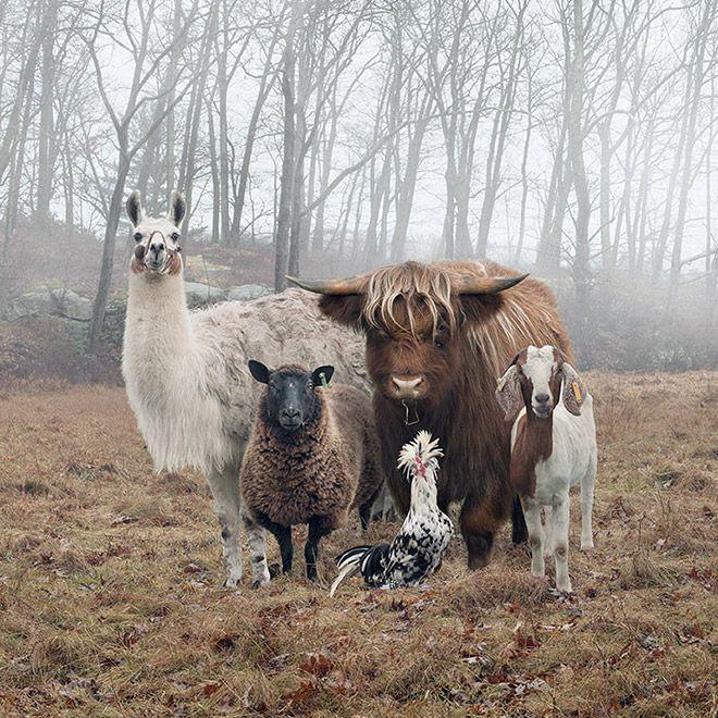 Снимки животных, которые подходят для обложек музыкальных альбомов