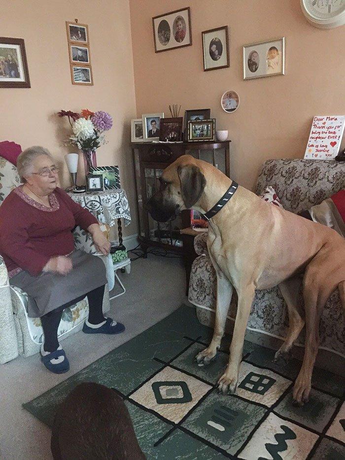 Фотографии догов докажут, что это очень большие собаки