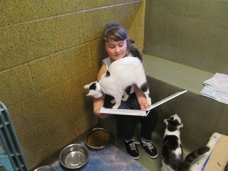 Кошки помогают детям развить навык чтения