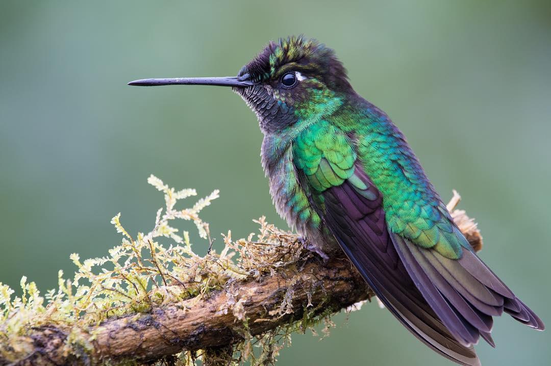 Замечательные фотографии птиц Алехандры Перез