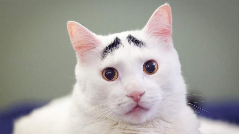 Самые знаменитые коты, которые покорили интернет