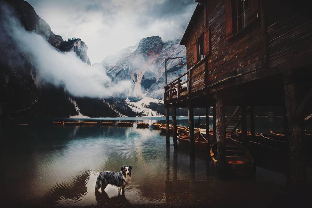 Симпатичные собаки на снимках Кристины Квапиловой