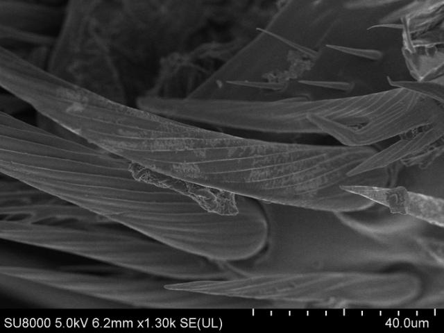 Обычная пчела под электронным микроскопом