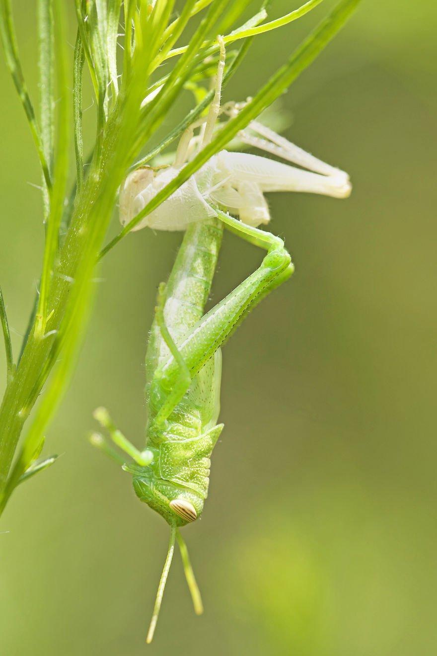 Макрофотографии пауков и насекомых от Данаи Вулф