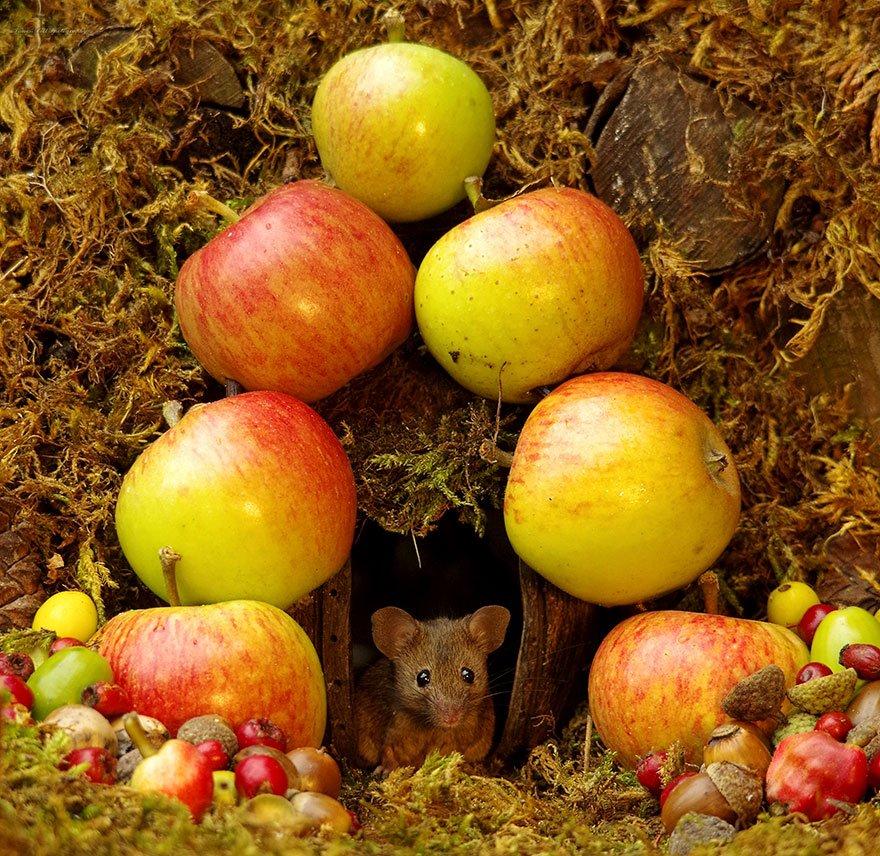 Британец построил деревню для живущих у него в саду мышей