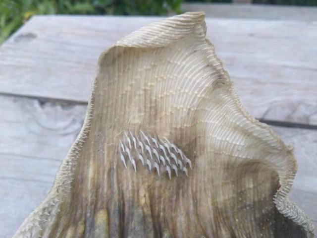 Странный скелет морского существа на побережье в Новой Зеландии