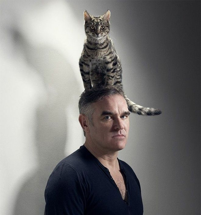 Идеальные мужчины с котами по версии независимых женщин