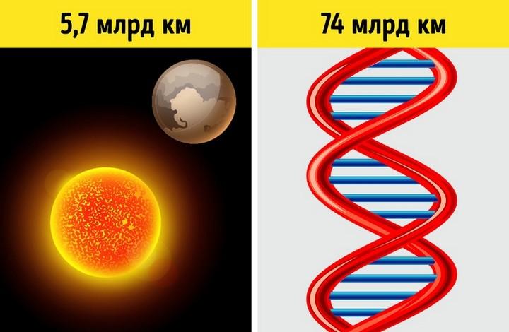 5 фактов о ДНК помогут понять, как устроена живая природа