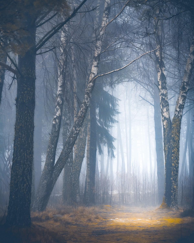 Мистические леса Швейцарии в объективе Горана Эбенхарта