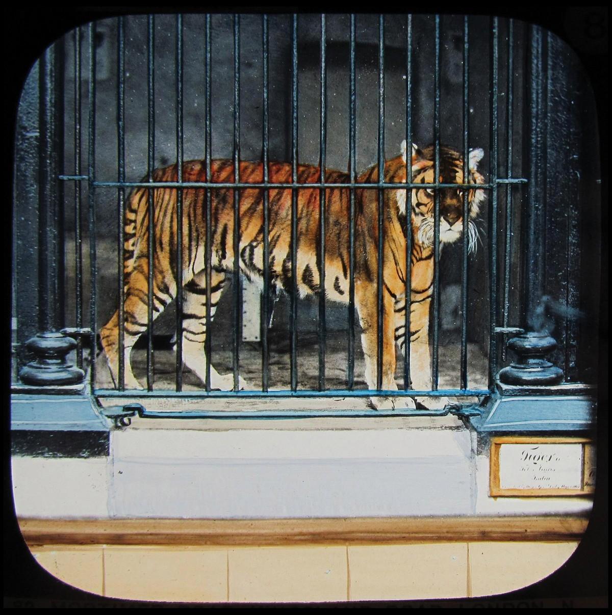 Редкие цветные слайды первых животных лондонского зоопарка