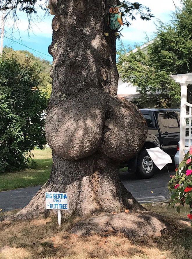 Деревья с внушительными задницами
