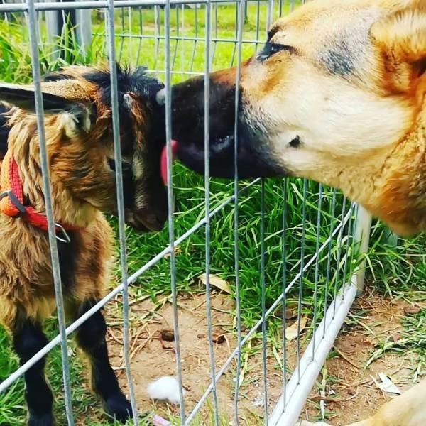 Замечательные примеры необычной дружбы разных животных