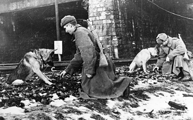 Животные помогали победить Красной Армии