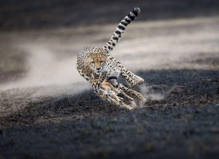 Лучшие снимки журнала National Geographic 2018
