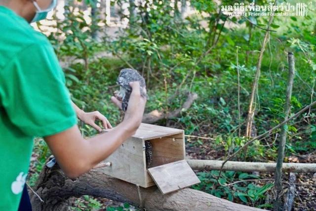 Фермер из Таиланда нашел маленьких сов, которым требовалась помощь