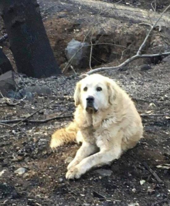 Пес Мэдисон почти месяц ждал хозяев у сгоревшего дома