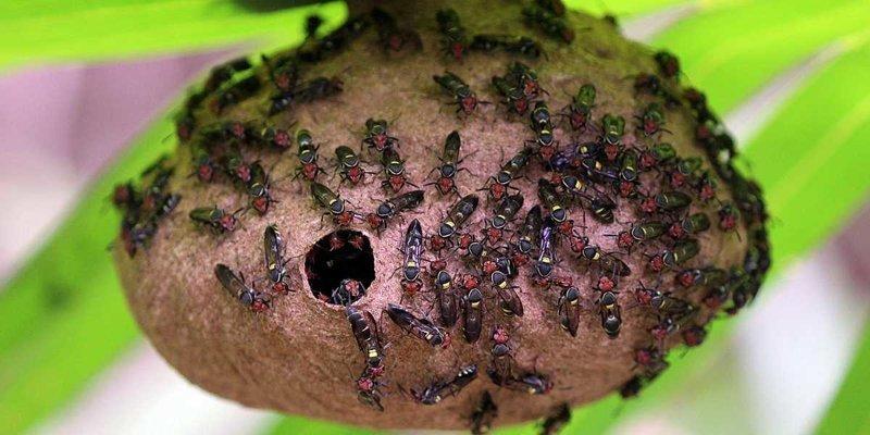 Ученые создали новый антибиотик на основе яда осы