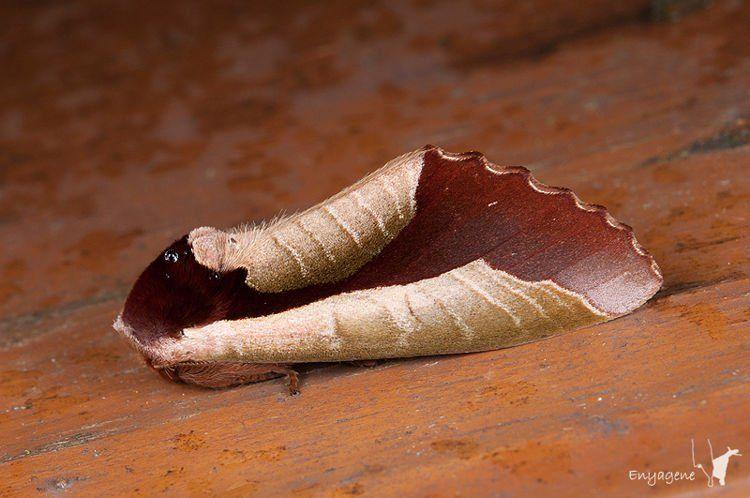 Увидев сухой лист, присмотритесь повнимательнее