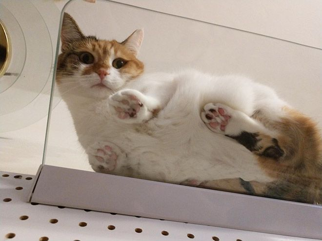 Забавные коты на прозрачных столах и полках