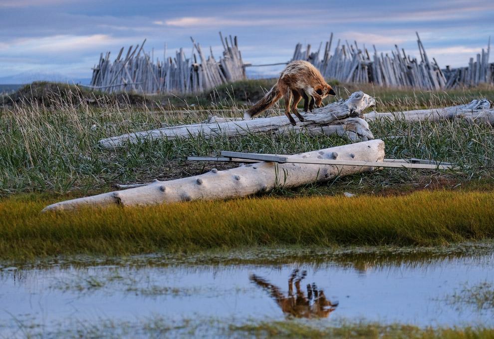 Лучшие снимки природы с конкурса Британского экологического общества 2018