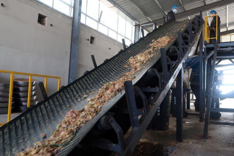 Тараканы утилизируют пищевые отходы в Китае