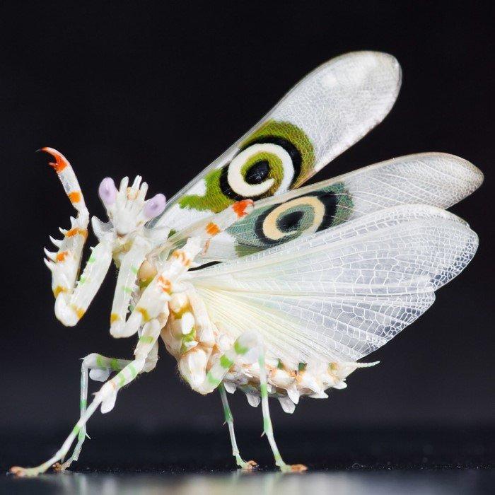 Членистоногие и насекомые, в которых сложно поверить