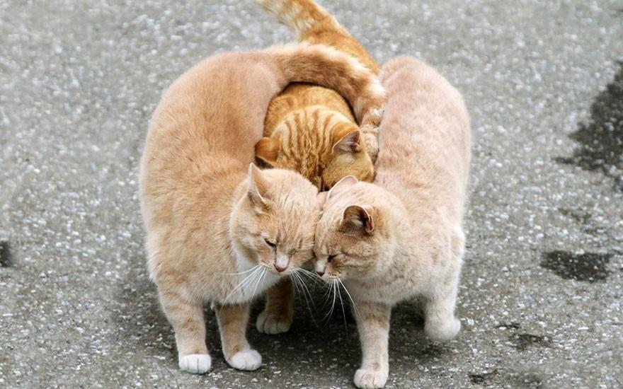 Любовь, эмоции и поцелуи животных