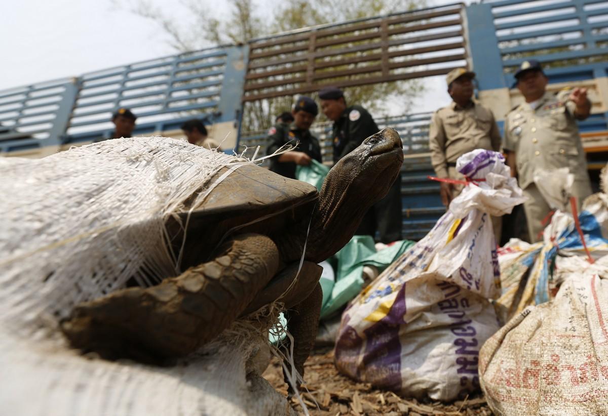 Контрабандные животные, которые были изъяты на таможне