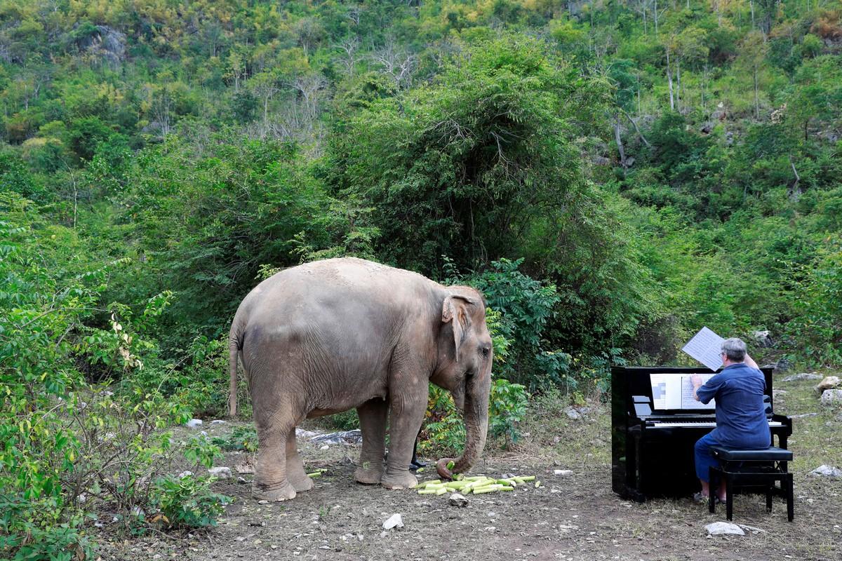 Музыка в приюте для слонов