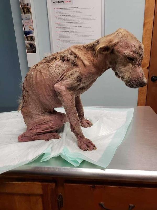 Жители Техаса спасли бездомного пса, но не знали, что он выживет