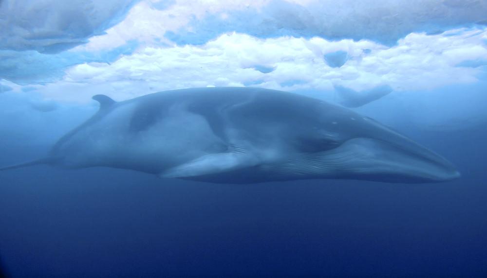 Создания морских глубин