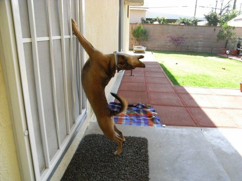 25 домашних животных, которые хотят попасть внутрь
