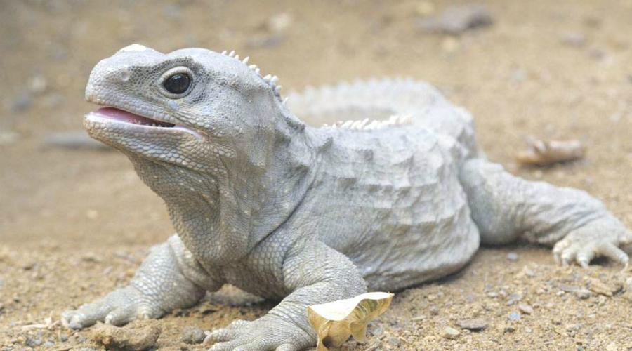 Древние создания, которые ещё живут на Земле