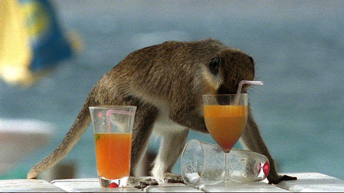 Необычные истории с участием пьяных животных