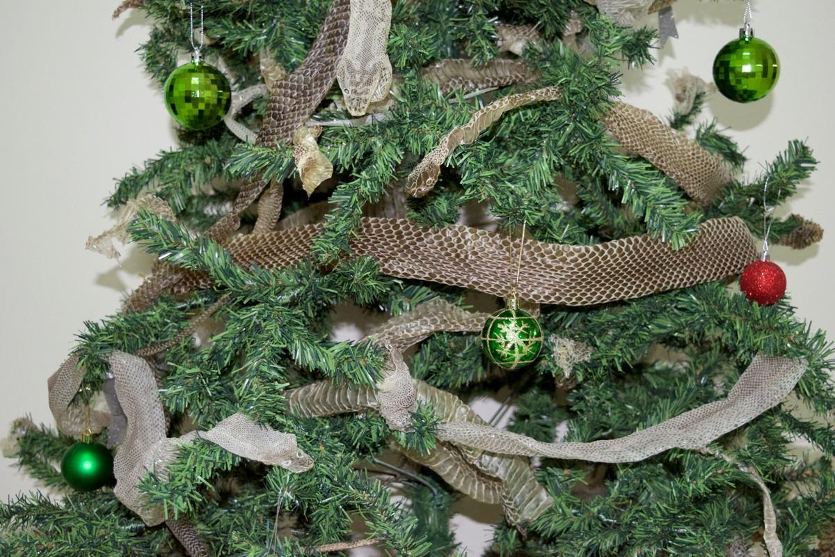 Австралийская пара украсила новогоднюю ёлку шкурами змей