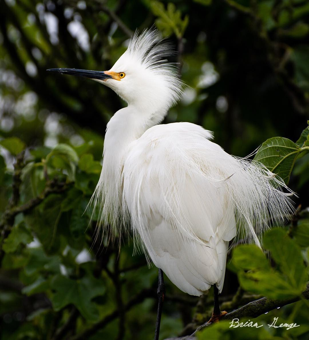 Птицы на снимках 17-летнего фотографа Брайана Генге