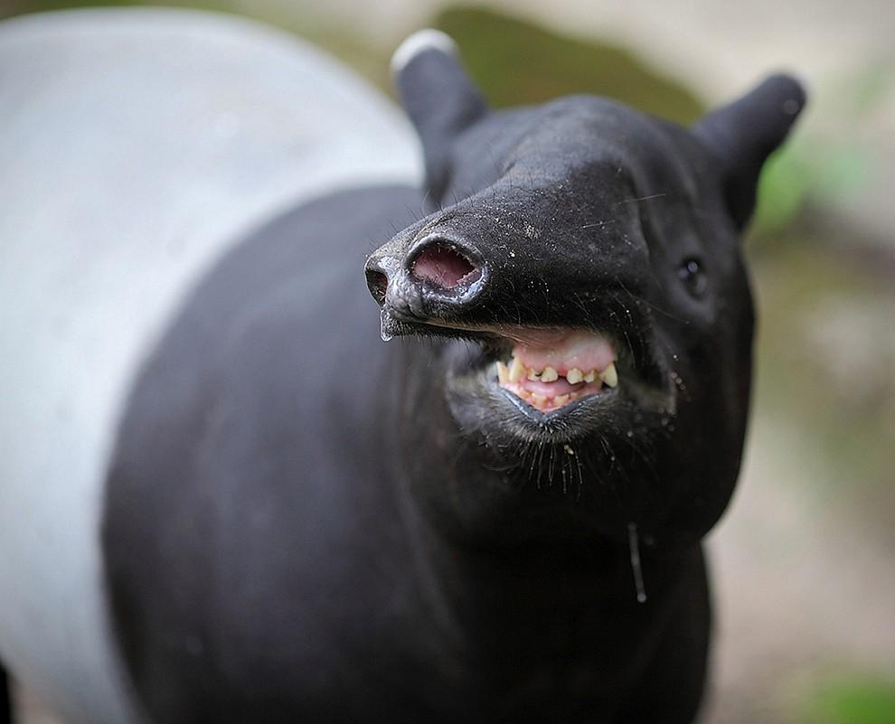 Животные, которые плохо получились на фото