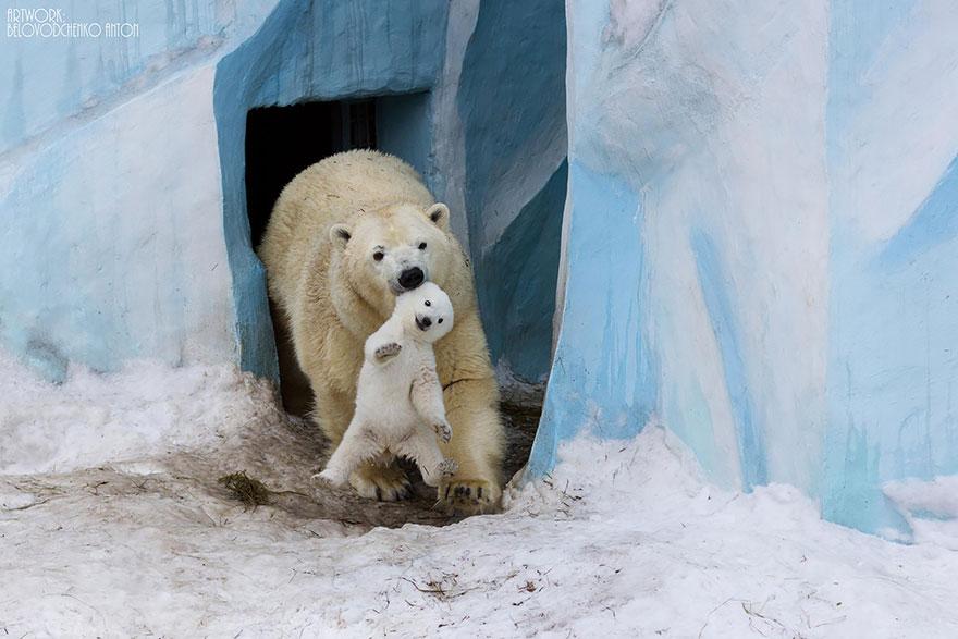 Милейшие мамы-медведицы учат медвежат уму-разуму