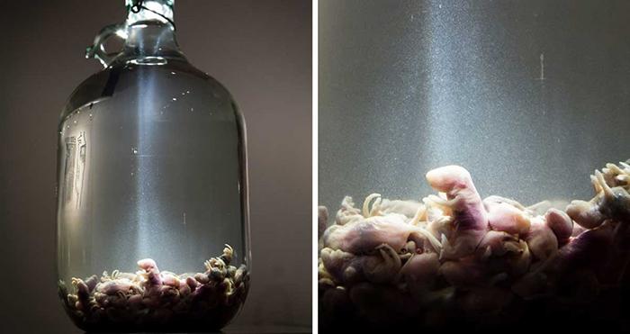 Музей самой отвратительной еды в Швеции