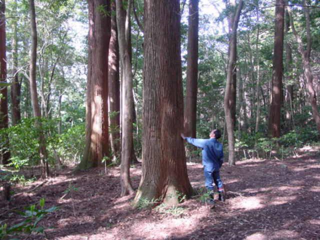 Необычный эксперимент японских ученых
