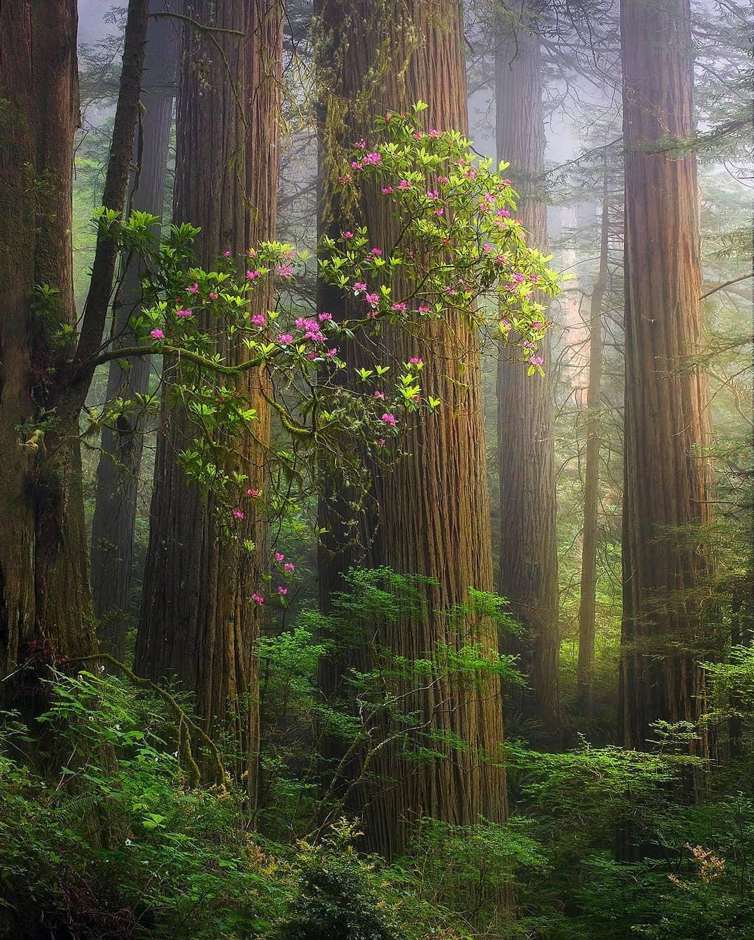 Удивительные природные пейзажи от Марка Адамуса
