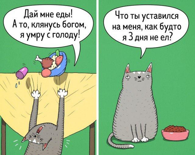 Кошки - самые противоречивые создания на планете