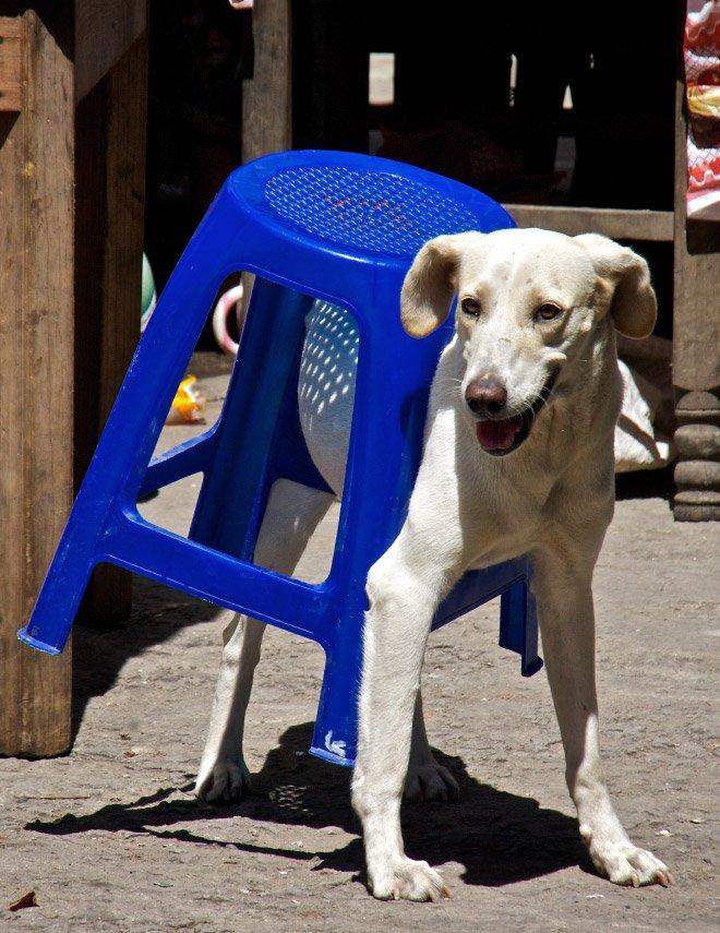 Домашние животные, которые пользуются человеческой мебелью