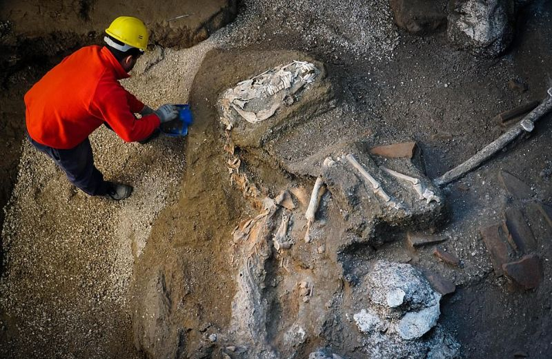 В Помпеях нашли боевого коня времен извержения Везувия