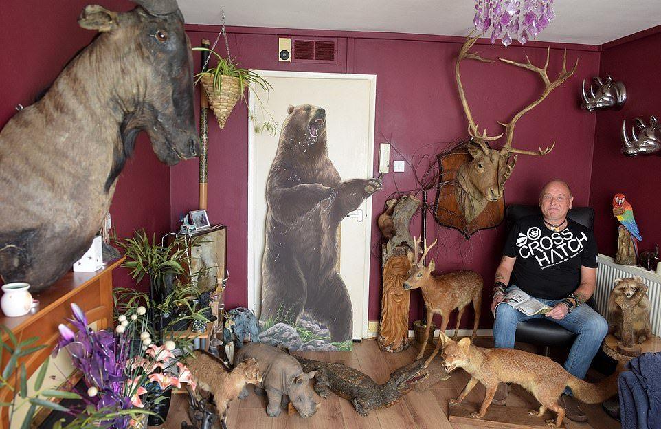 Британец заполнил квартиру чучелами животных