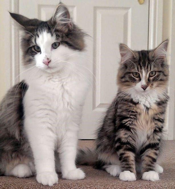 Кот сбежал от хозяев на фабрику зоокорма и отсутствовал полтора года