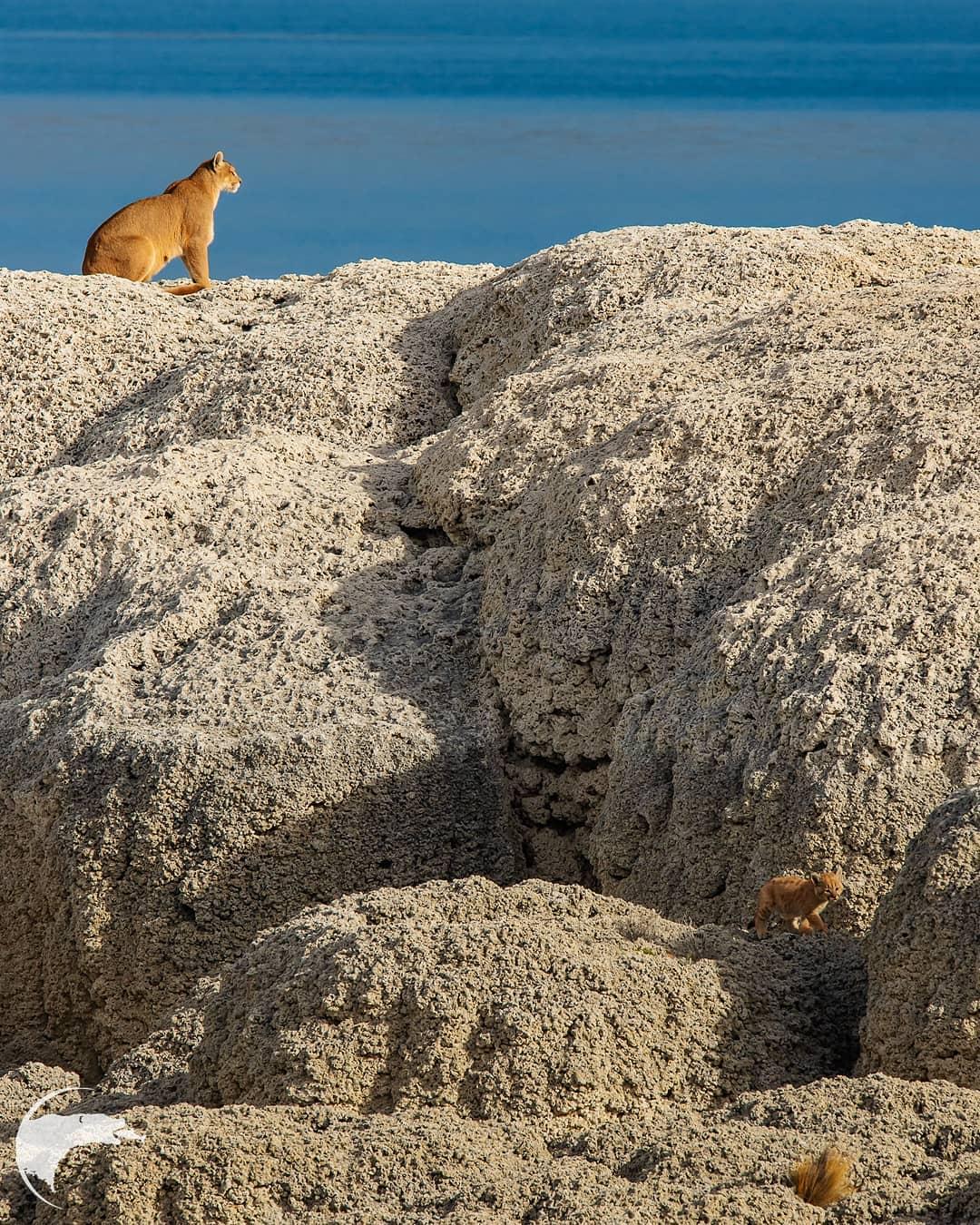 Дикие животные на снимках Томаса Мангельсена