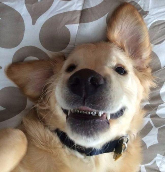 Щенок с брекетами на зубах стал звездой Интернета
