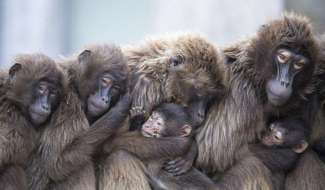 Лучшие фотографии с животными от агентства Associated Press 2018 года